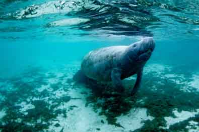 Manatee viewing